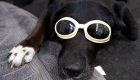 Animal physiotherapists help dog & cat