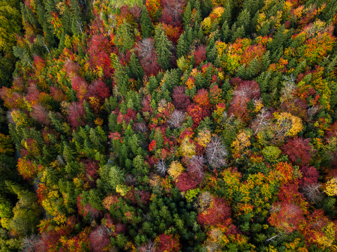Aerial view on autumn forest. Bavaria, Germany.